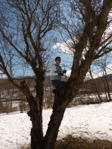 The author. Up in a tree again.