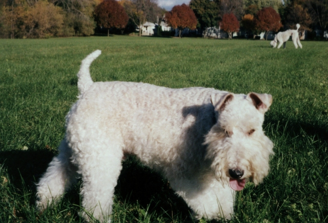 Fred, the Wise Fox Terrier